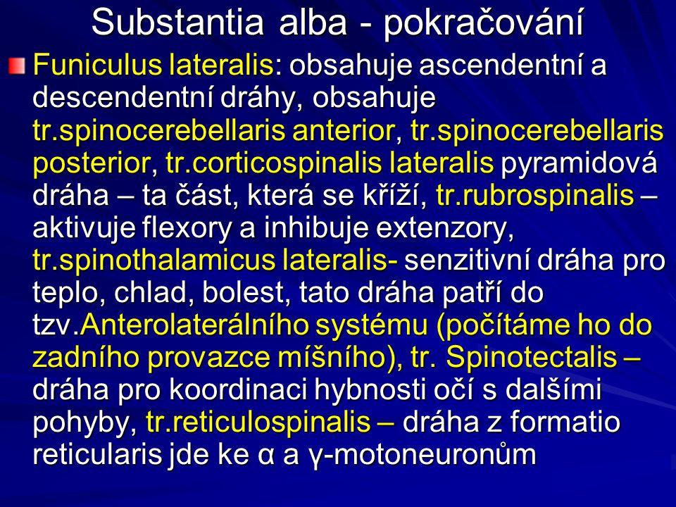 Substantia alba - pokračování Funiculus lateralis: obsahuje ascendentní a descendentní dráhy, obsahuje tr.spinocerebellaris anterior, tr.spinocerebellaris posterior, tr.corticospinalis lateralis pyramidová dráha – ta část, která se kříží, tr.rubrospinalis – aktivuje flexory a inhibuje extenzory, tr.spinothalamicus lateralis- senzitivní dráha pro teplo, chlad, bolest, tato dráha patří do tzv.Anterolaterálního systému (počítáme ho do zadního provazce míšního), tr.