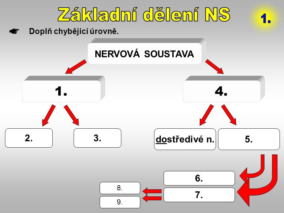 NERVOVÁ SOUSTAVA 1.4. 2.3. dostředivé n.5. 6. 7. 8. 9. Doplň chybějící úrovně.