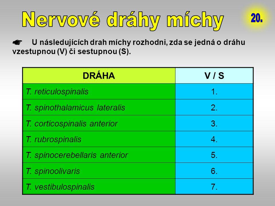 U následujících drah míchy rozhodni, zda se jedná o dráhu vzestupnou (V) či sestupnou (S). DRÁHAV / S T. reticulospinalis1. T. spinothalamicus lateral