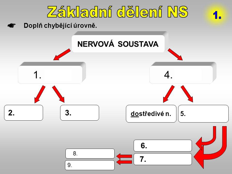 NERVOVÁ SOUSTAVA 1. CNS4. PNS 2.mozek3.mícha dostředivé n.5.odstředivé n. 6.motorické 7.autonomní 8.sympatikus 9.parasympatikus Doplň chybějící úrovně