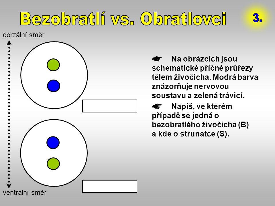 Na obrázcích jsou schematické příčné průřezy tělem živočicha. Modrá barva znázorňuje nervovou soustavu a zelená trávicí. Napiš, ve kterém případě se j