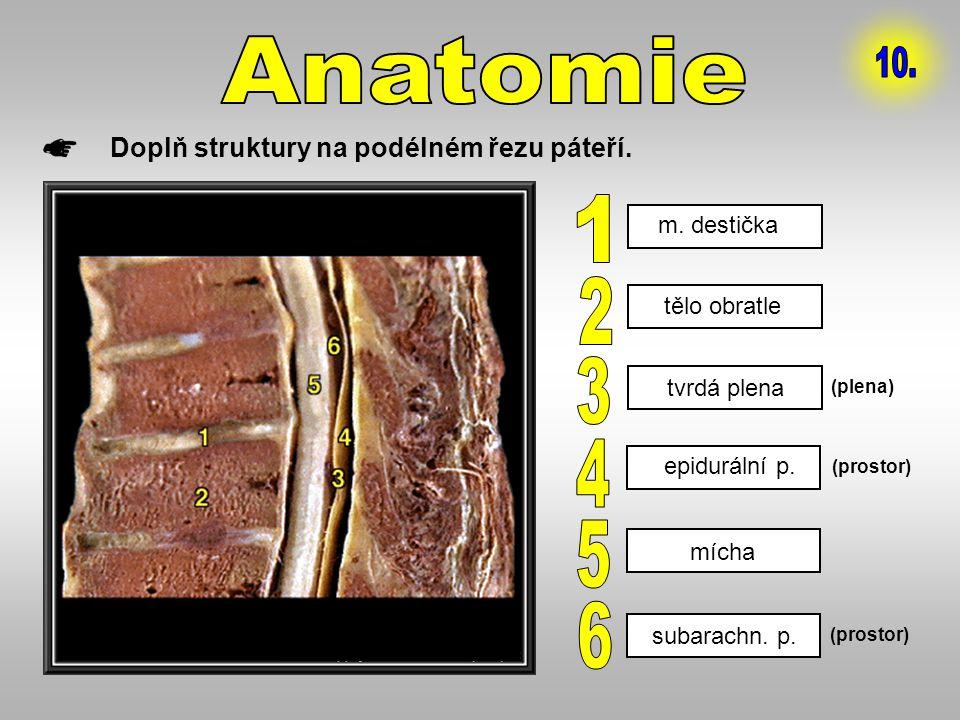 Doplň struktury na podélném řezu páteří. (prostor) (plena) m. destička tělo obratle tvrdá plena epidurální p. mícha subarachn. p.