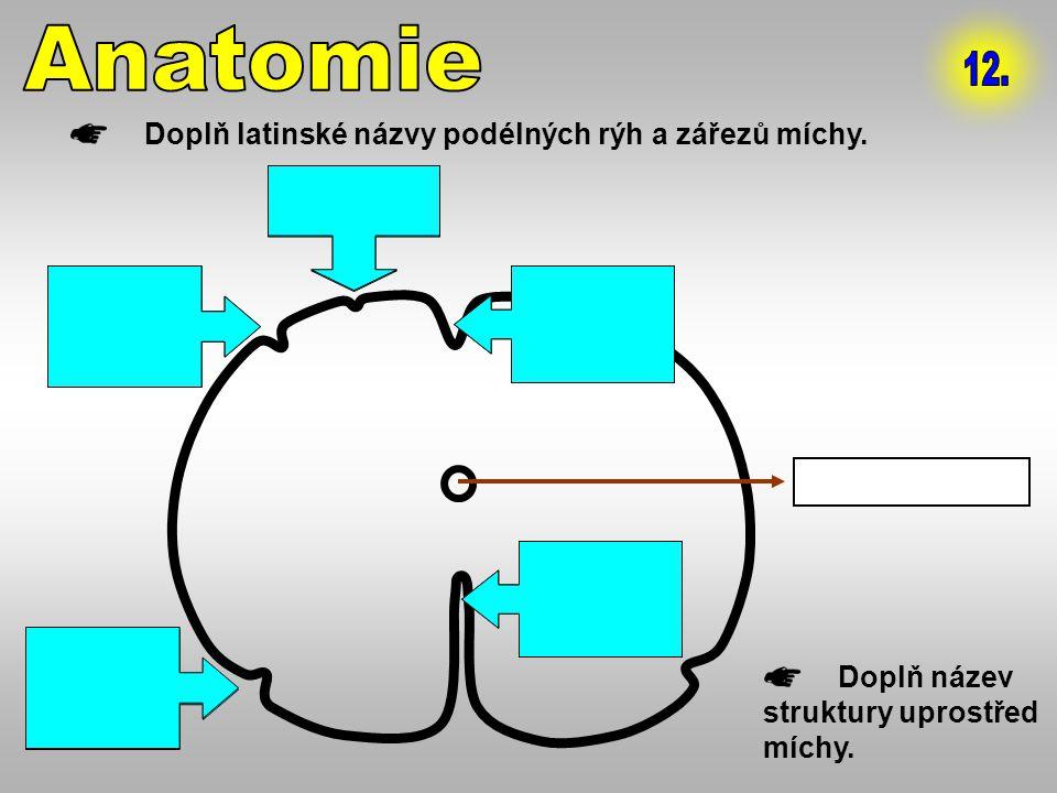 3. sulcus lateralis anterior 2. sulcus lateralis posterior 1. sulcus intermedius 4. fissura mediana anterior 5. sulcus medianus posterior Doplň latins