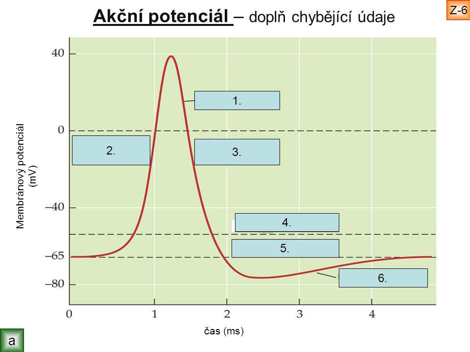 Akční potenciál – doplň chybějící údaje Membránový potenciál (mV) čas (ms) akční potenciál klidový potenciál napěťový práh hyperpolarizace repolarizace depolarizace a Z-7