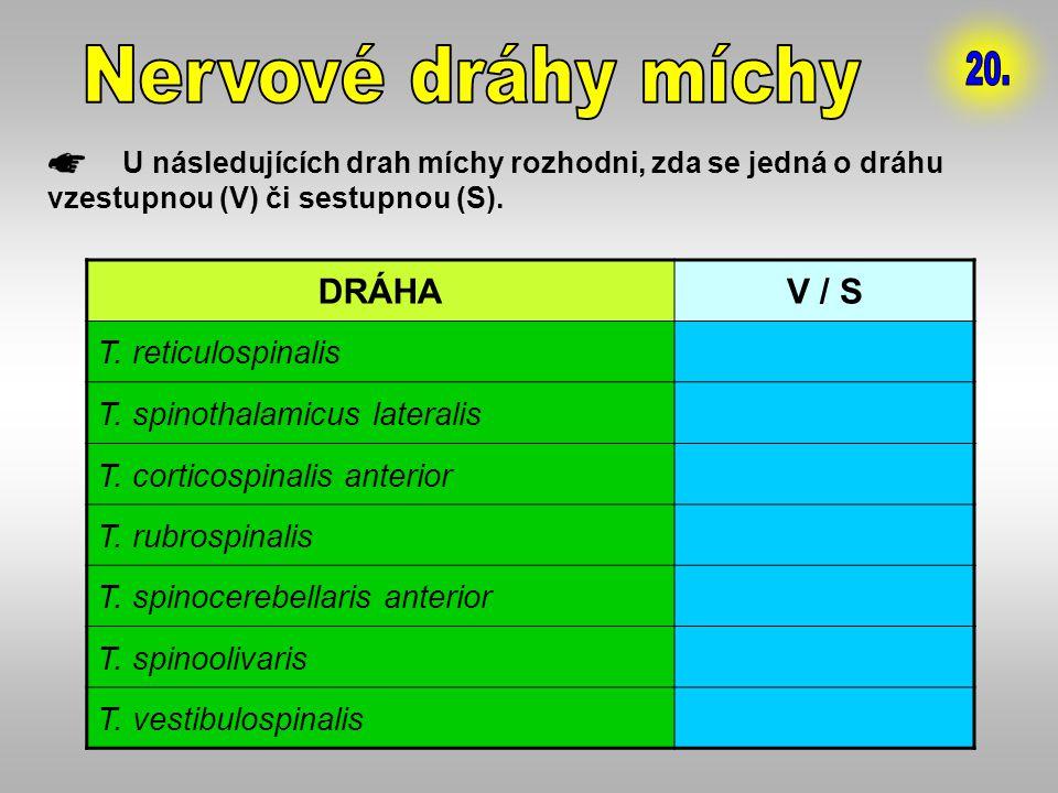 U následujících drah míchy rozhodni, zda se jedná o dráhu vzestupnou (V) či sestupnou (S). DRÁHAV / S T. reticulospinalisS T. spinothalamicus laterali