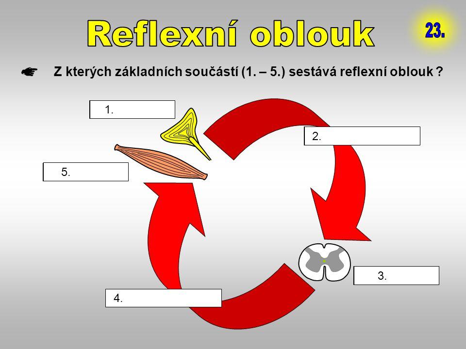 Z kterých základních součástí (1. – 5.) sestává reflexní oblouk ? 1. ………………… 2. ………………… 3. ………………… 4. ………………… 5. ………………… 1. receptor 2. dostředivá drá