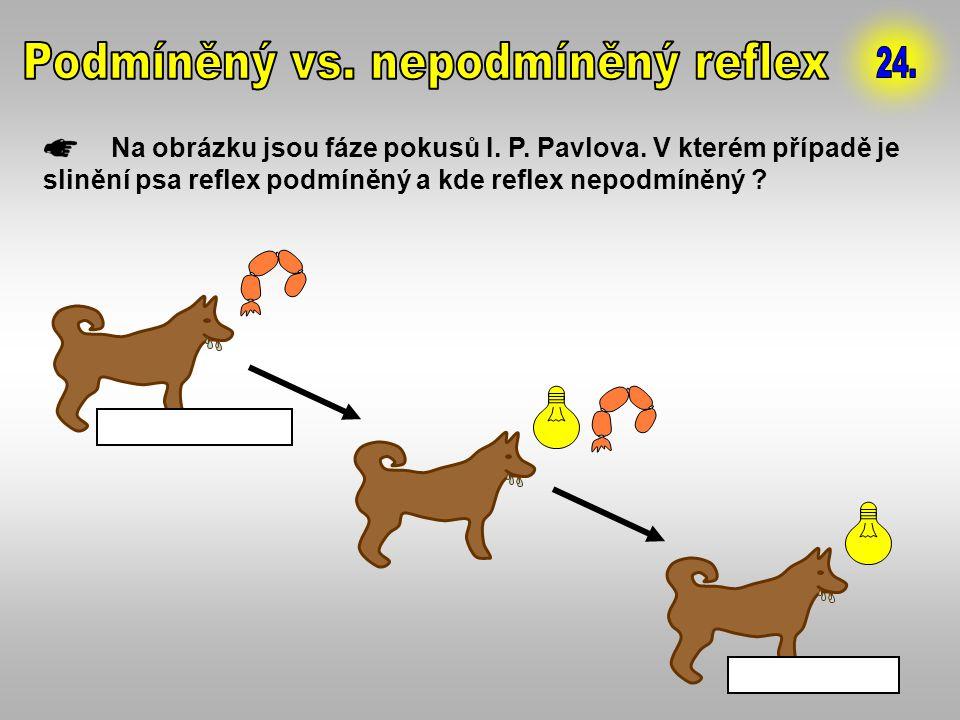 Na obrázku jsou fáze pokusů I. P. Pavlova. V kterém případě je slinění psa reflex podmíněný a kde reflex nepodmíněný ? 1. NEPODMÍNĚNÝ 2. PODMÍNĚNÝ