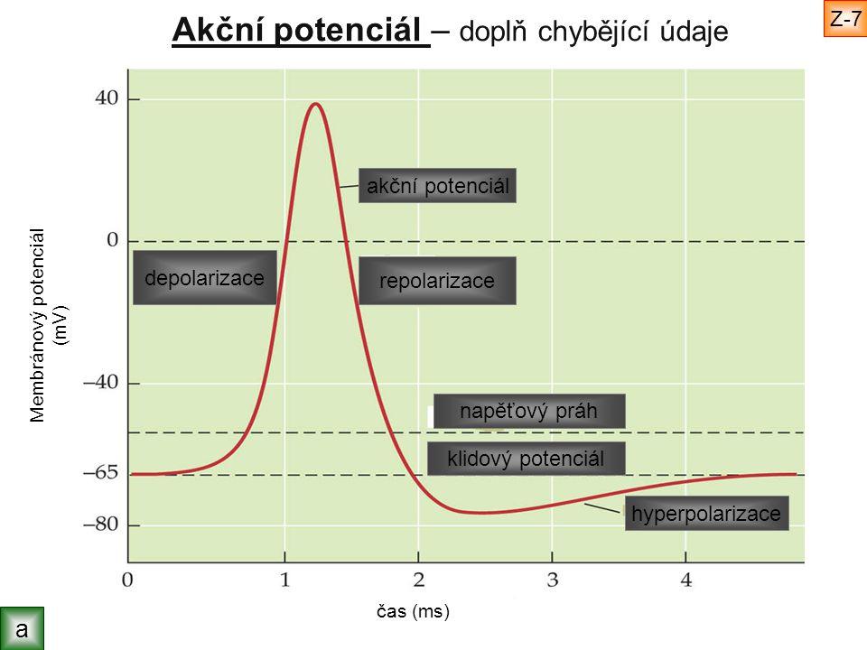 Akční potenciál – doplň chybějící údaje Membránový potenciál (mV) čas (ms) akční potenciál klidový potenciál napěťový práh hyperpolarizace repolarizac