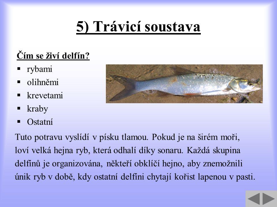 5) Trávicí soustava Čím se živí delfín?  rybami  olihněmi  krevetami  kraby  Ostatní Tuto potravu vyslídí v písku tlamou. Pokud je na širém moři,