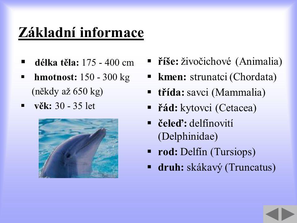 Základní informace  délka těla: 175 - 400 cm  hmotnost: 150 - 300 kg (někdy až 650 kg)  věk: 30 - 35 let  říše: živočichové (Animalia)  kmen: strunatci (Chordata)  třída: savci (Mammalia)  řád: kytovci (Cetacea)  čeleď: delfínovití (Delphinidae)  rod: Delfín (Tursiops)  druh: skákavý (Truncatus)