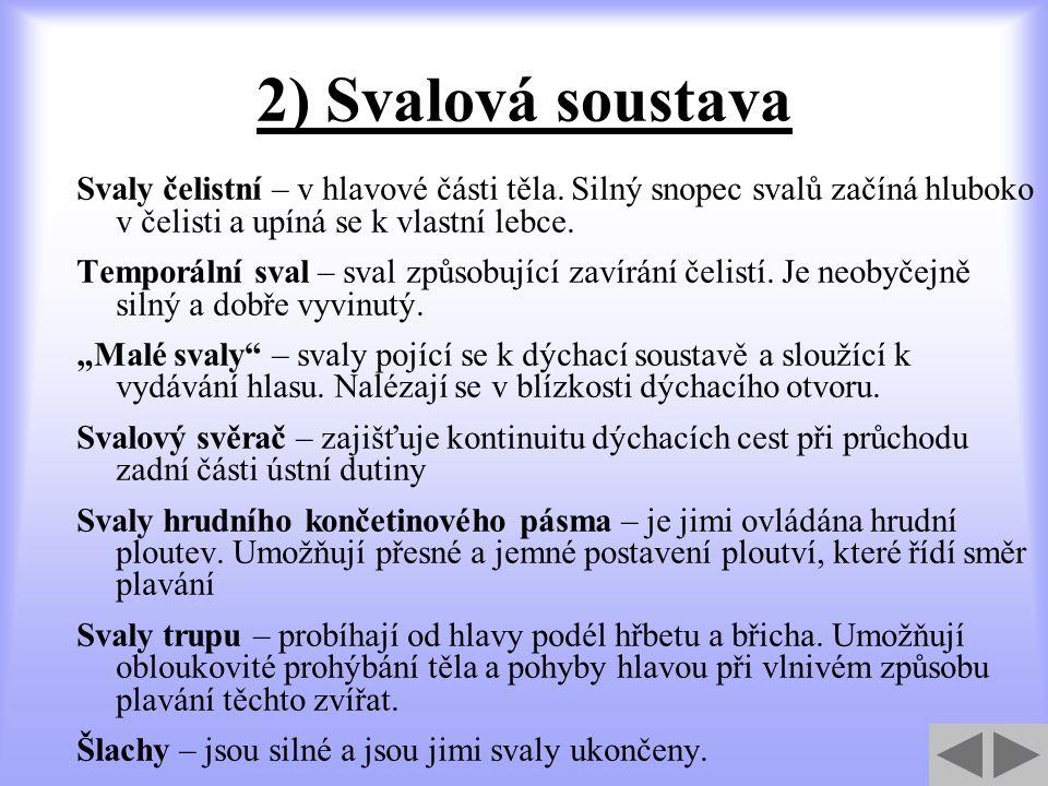 2) Svalová soustava Svaly čelistní – v hlavové části těla.