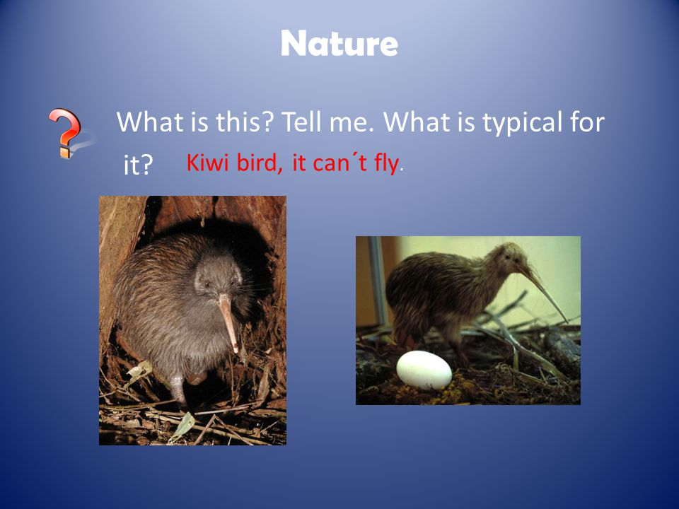 Nature What is this Tell me. What is typical for it Kiwi bird, it can´t fly.