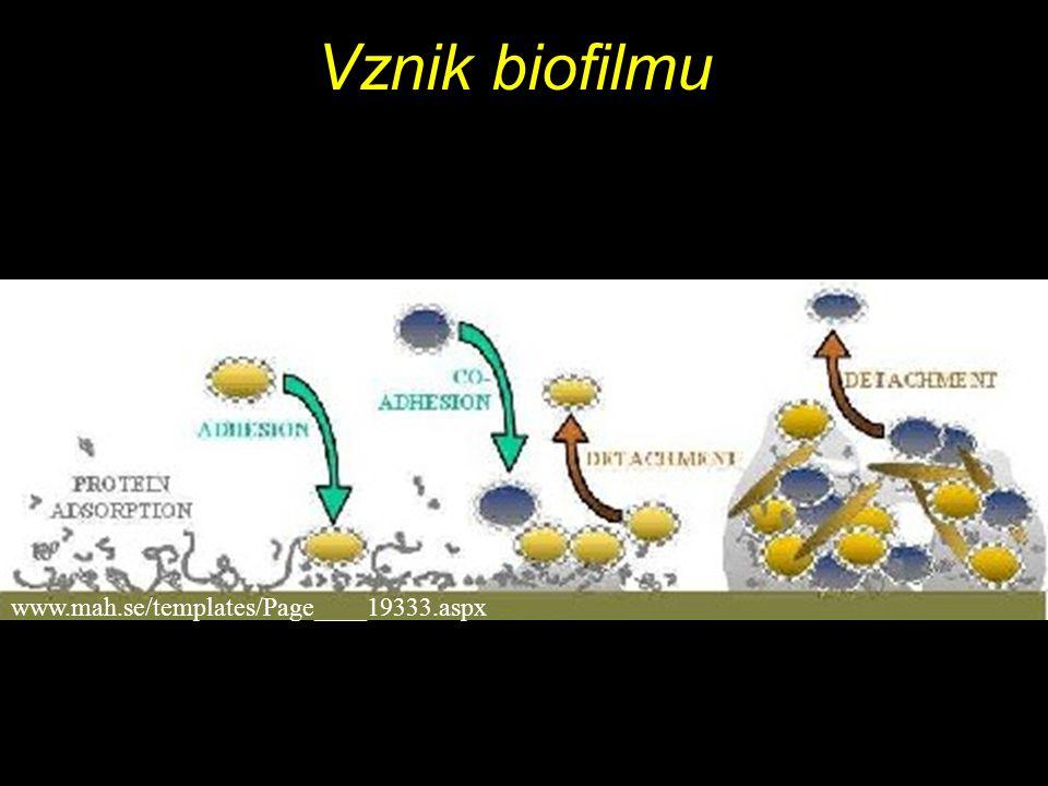 Vznik biofilmu www.mah.se/templates/Page____19333.aspx