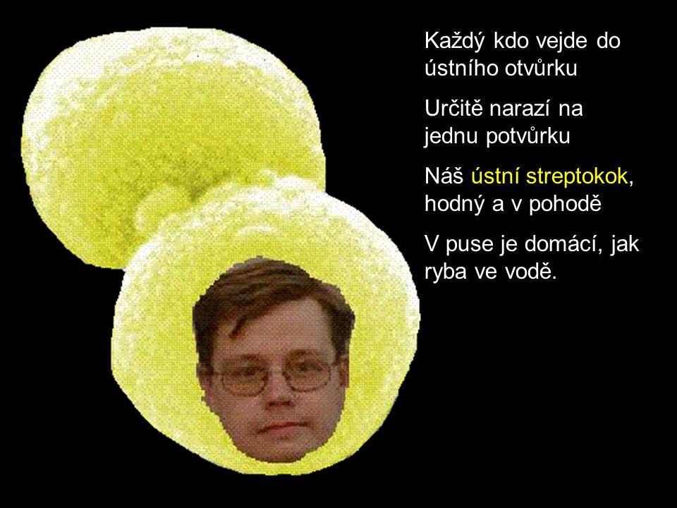 http://www.osel.cz