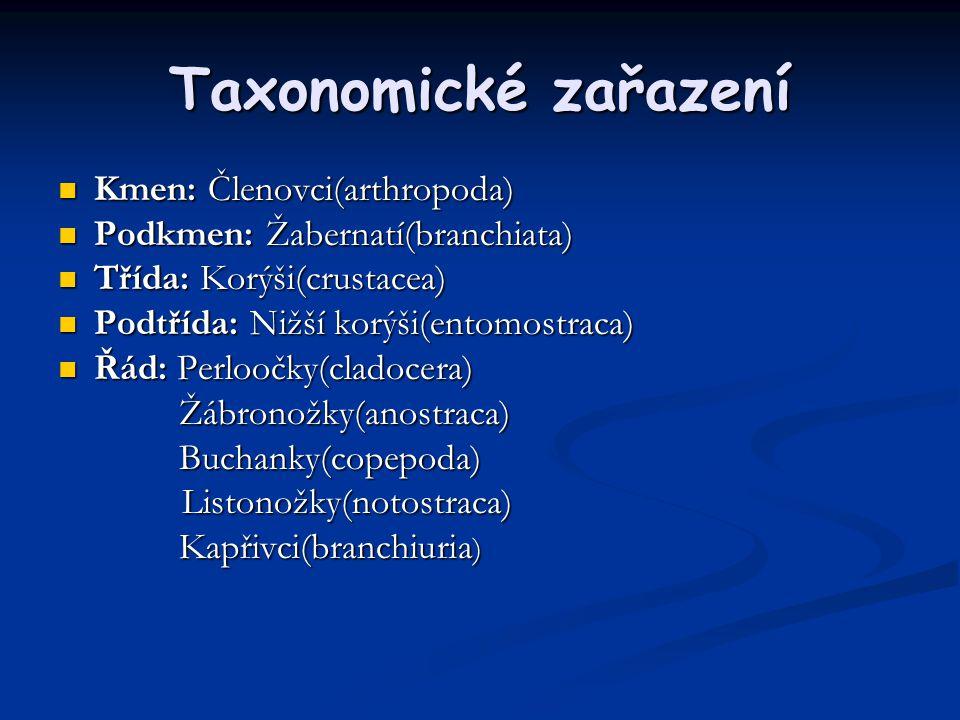 Perloočky Hrotnatka obecná(Daphnia pulex)