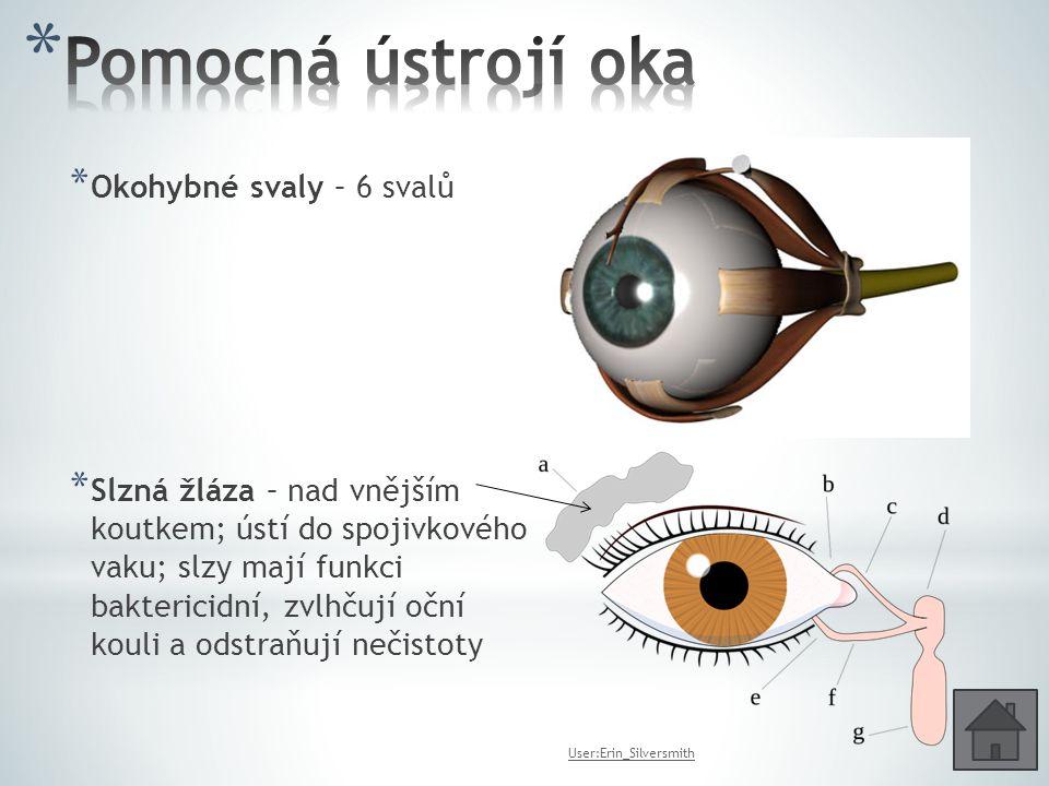 * Okohybné svaly – 6 svalů * Slzná žláza – nad vnějším koutkem; ústí do spojivkového vaku; slzy mají funkci baktericidní, zvlhčují oční kouli a odstra