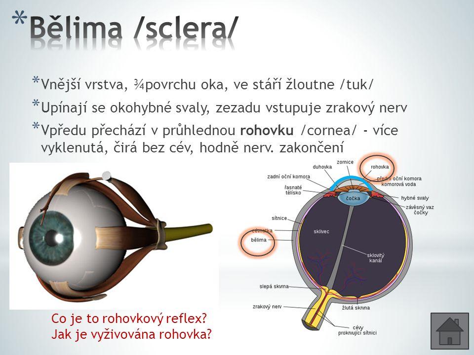 * Vnější vrstva, ¾povrchu oka, ve stáří žloutne /tuk/ * Upínají se okohybné svaly, zezadu vstupuje zrakový nerv * Vpředu přechází v průhlednou rohovku