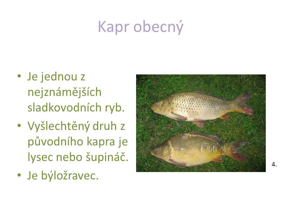 Kapr obecný Je jednou z nejznámějších sladkovodních ryb.