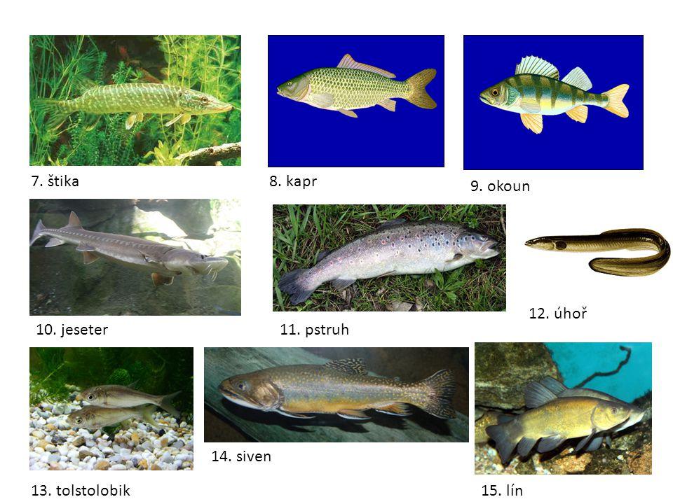 2.úkol Víš, kde se odchovávají malé rybky.