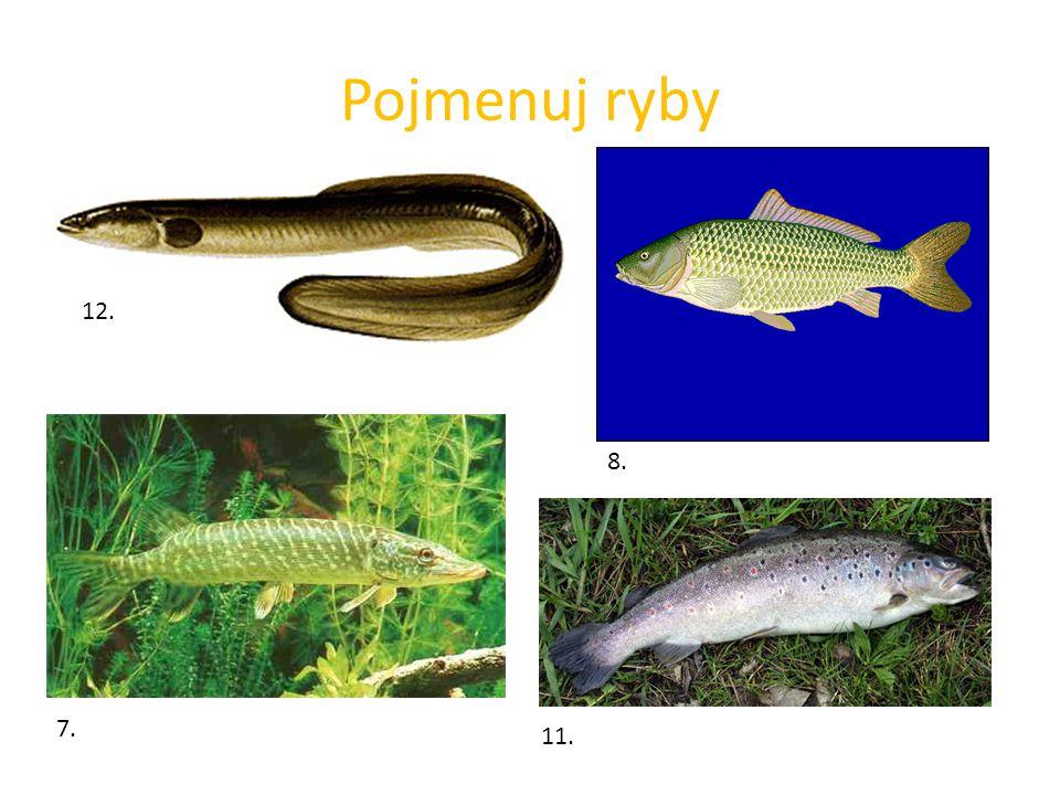 Pojmenuj ryby 12. 8. 11. 7.