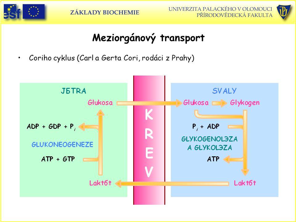 Meziorgánový transport Coriho cyklus (Carl a Gerta Cori, rodáci z Prahy)