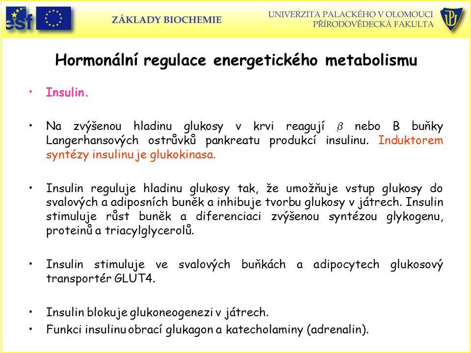 Hormonální regulace energetického metabolismu Insulin. Na zvýšenou hladinu glukosy v krvi reagují  nebo B buňky Langerhansových ostrůvků pankreatu pr