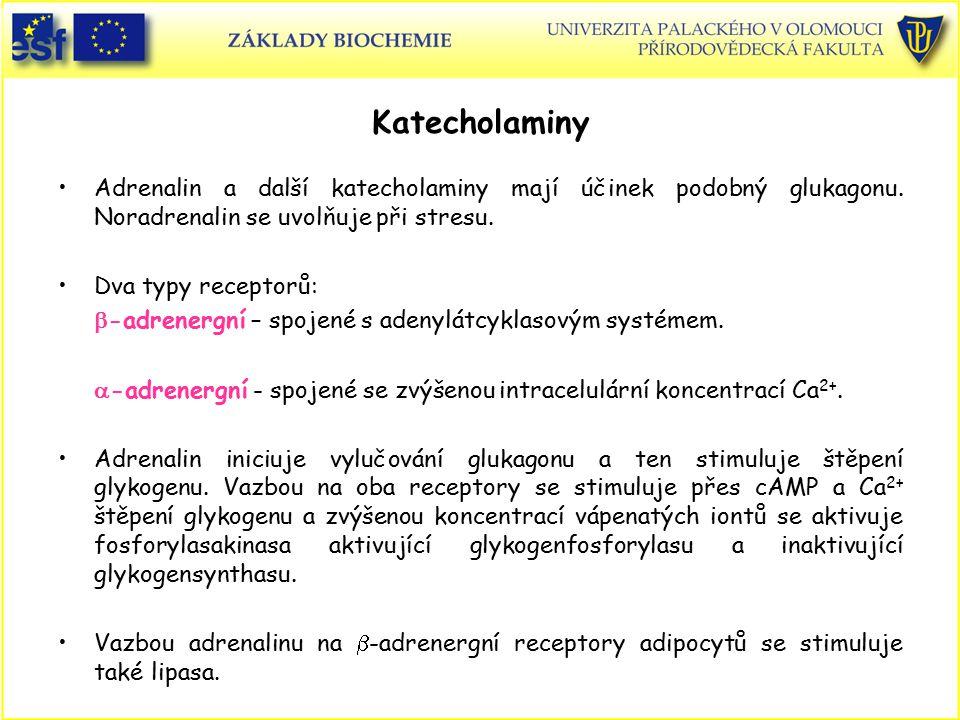 Katecholaminy Adrenalin a další katecholaminy mají účinek podobný glukagonu. Noradrenalin se uvolňuje při stresu. Dva typy receptorů:  -adrenergní –
