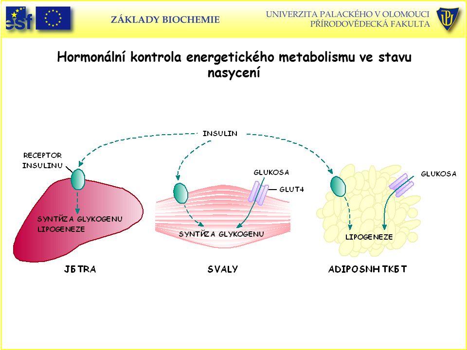 Hormonální kontrola energetického metabolismu ve stavu nasycení
