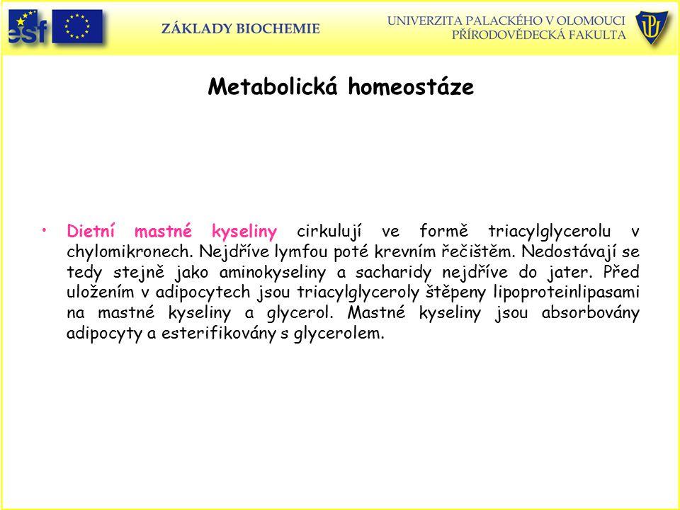 Metabolická homeostáze Dietní mastné kyseliny cirkulují ve formě triacylglycerolu v chylomikronech. Nejdříve lymfou poté krevním řečištěm. Nedostávají