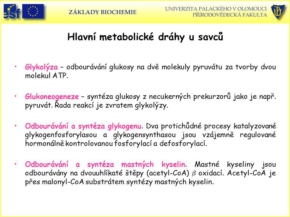 Hlavní metabolické dráhy u savců Glykolýza – odbourávání glukosy na dvě molekuly pyruvátu za tvorby dvou molekul ATP. Glukoneogeneze – syntéza glukosy