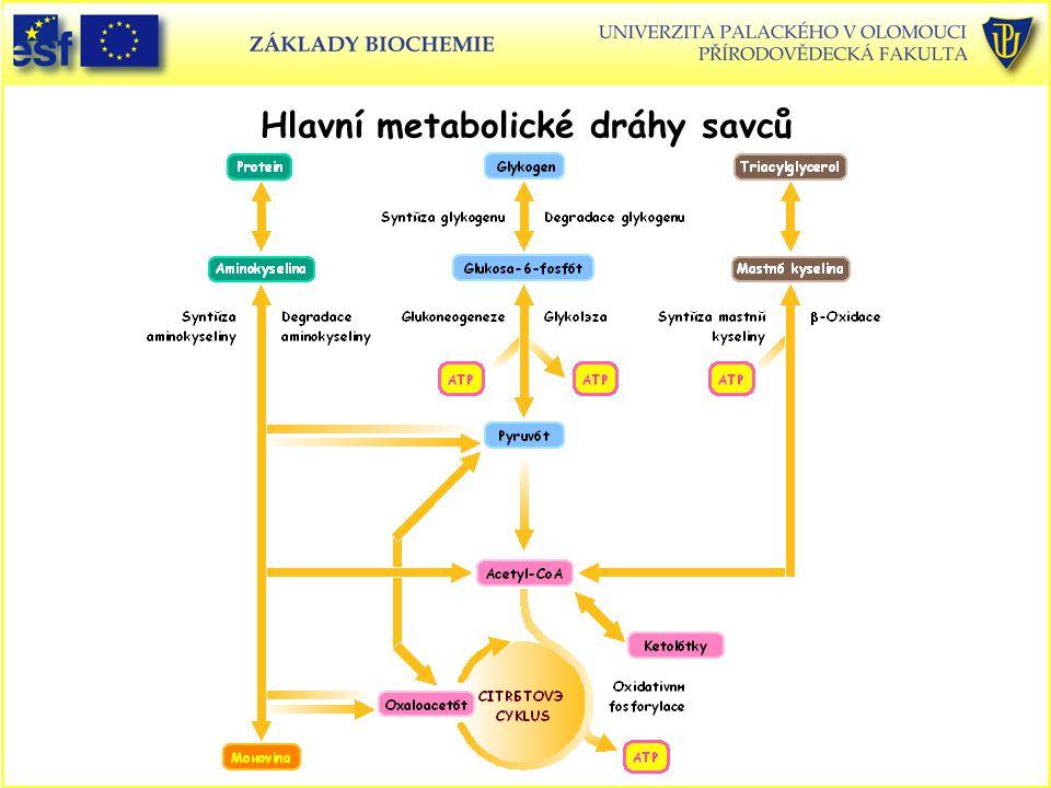 Hlavní metabolické dráhy savců