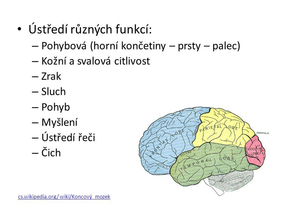 Ústředí různých funkcí: – Pohybová (horní končetiny – prsty – palec) – Kožní a svalová citlivost – Zrak – Sluch – Pohyb – Myšlení – Ústředí řeči – Čic
