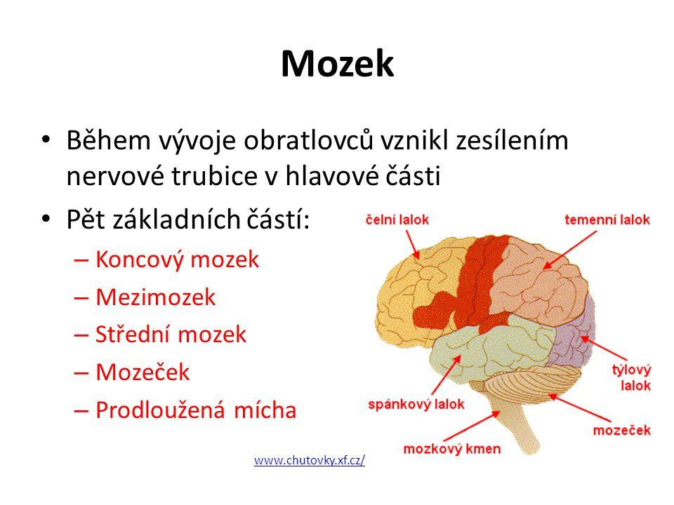 Mozek Během vývoje obratlovců vznikl zesílením nervové trubice v hlavové části Pět základních částí: – Koncový mozek – Mezimozek – Střední mozek – Moz