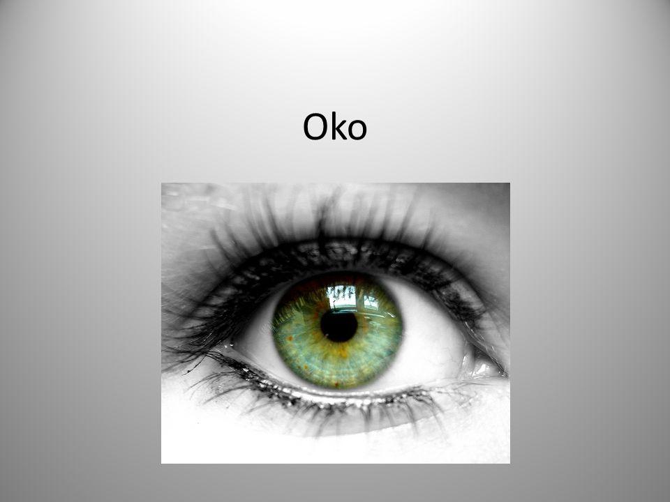 Jeden ze smyslových orgánů Zrakem vnímáme světlo, jeho intenzitu, barvy, tvary, vzdálenosti Umožňuje rozvoj mysli, vzdělání a zážitků