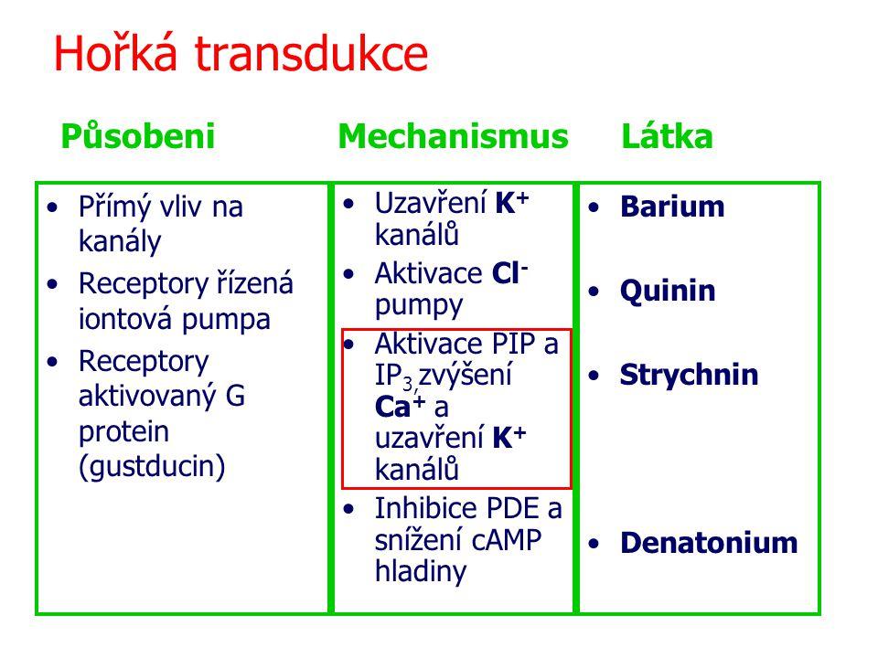 Hořká transdukce Přímý vliv na kanály Receptory řízená iontová pumpa Receptory aktivovaný G protein (gustducin) Uzavření K + kanálů Aktivace Cl - pumpy Aktivace PIP a IP 3, zvýšení Ca + a uzavření K + kanálů Inhibice PDE a snížení cAMP hladiny Barium Quinin Strychnin Denatonium Působeni Mechanismus Látka