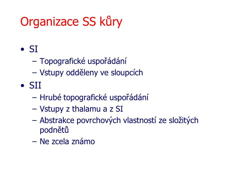 Organizace SS kůry SI –Topografické uspořádání –Vstupy odděleny ve sloupcích SII –Hrubé topografické uspořádání –Vstupy z thalamu a z SI –Abstrakce povrchových vlastností ze složitých podnětů –Ne zcela známo