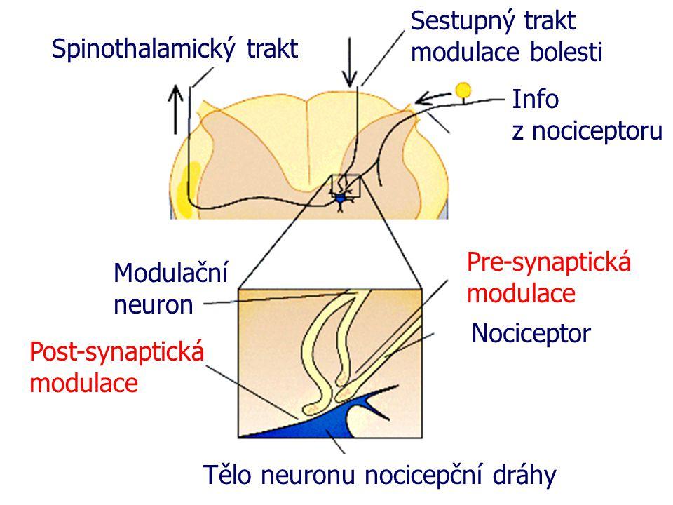 Tělo neuronu nocicepční dráhy Post-synaptická modulace Modulační neuron Pre-synaptická modulace Nociceptor Spinothalamický trakt Sestupný trakt modulace bolesti Info z nociceptoru