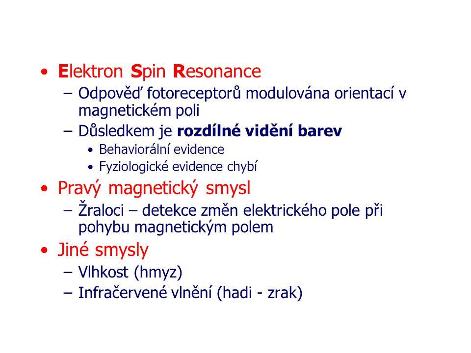 Elektron Spin Resonance –Odpověď fotoreceptorů modulována orientací v magnetickém poli –Důsledkem je rozdílné vidění barev Behaviorální evidence Fyziologické evidence chybí Pravý magnetický smysl –Žraloci – detekce změn elektrického pole při pohybu magnetickým polem Jiné smysly –Vlhkost (hmyz) –Infračervené vlnění (hadi - zrak)