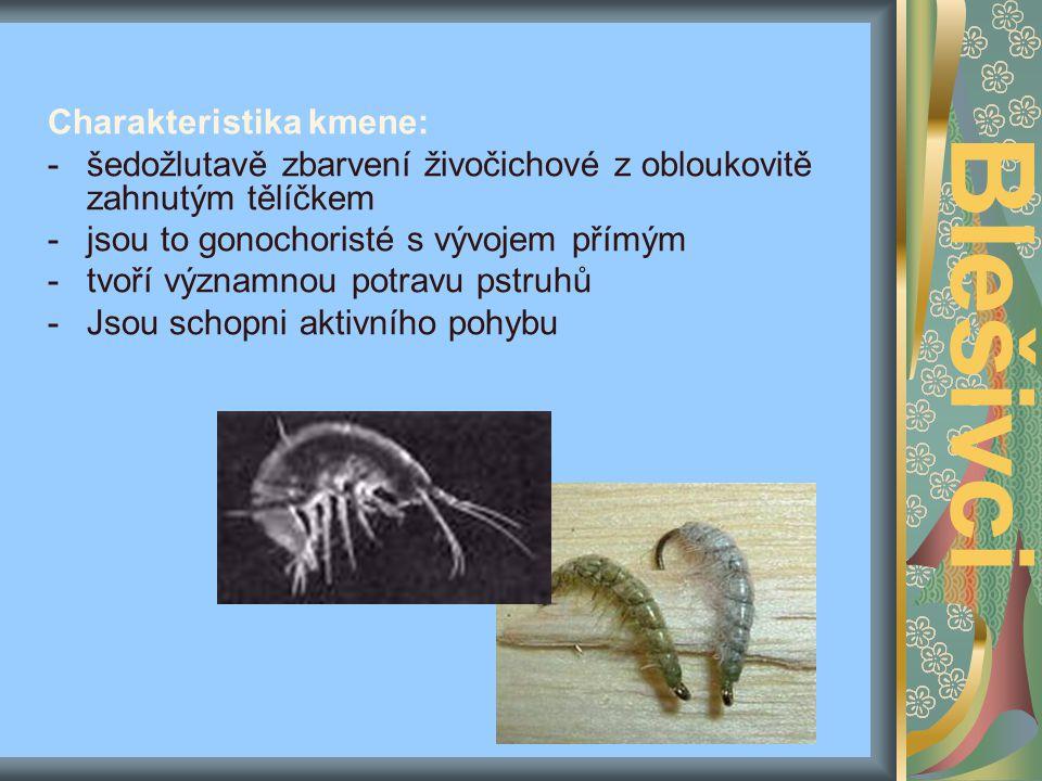 -blešivec je indikátorem čisté vody, tedy přesněji řečeno oligosaprobity. Blešivci