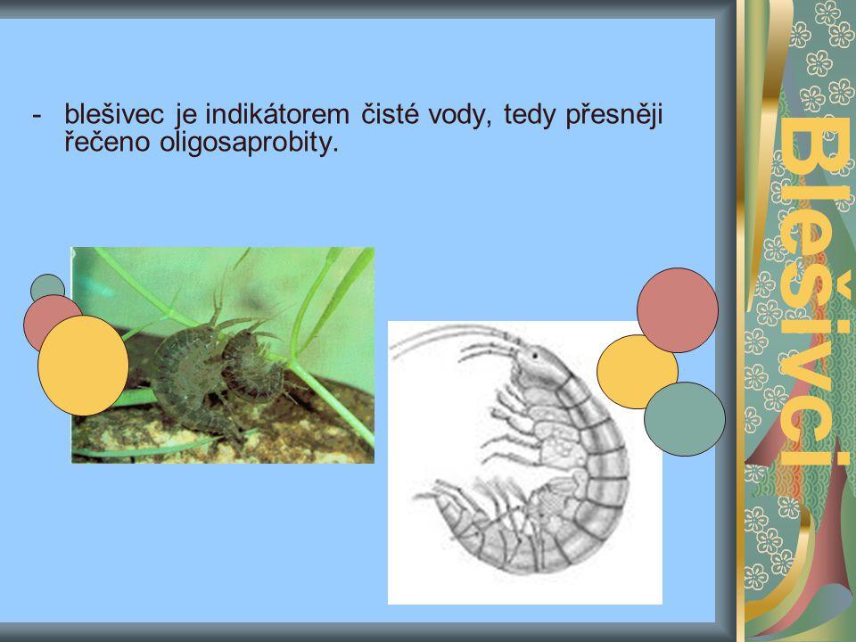 Dýchací soustava: - tak jako ostatní žabernatí dýchají vždy žábrami Pohyb: -mají rozeklané končetiny, první dva páry hlavových končetin jsou transformovány v tykadla (anteny a antynuly), další tři páry pak v kousací ústrojí, přesněji řečeno dva páry v maxily (čelisti) a jeden pár v mandibuly (kusadla) -mají 5 párů nožek.