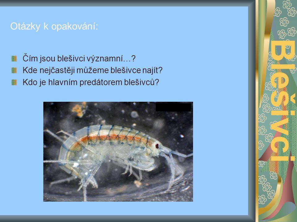 Zajímavosti: http://www.abdn.ac.uk/~clt011/zoology/ virtuallaboratory/laboratory/glossary/gamm arus.swf Blešivci