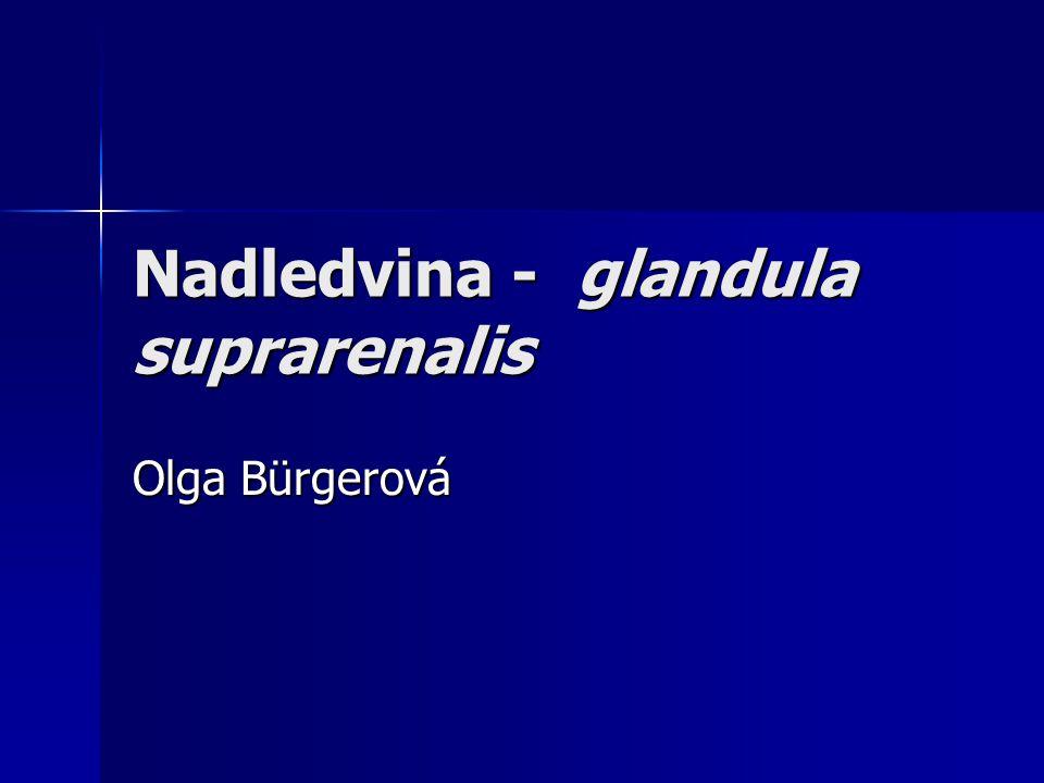 Nadledvina - glandula suprarenalis Olga Bürgerová