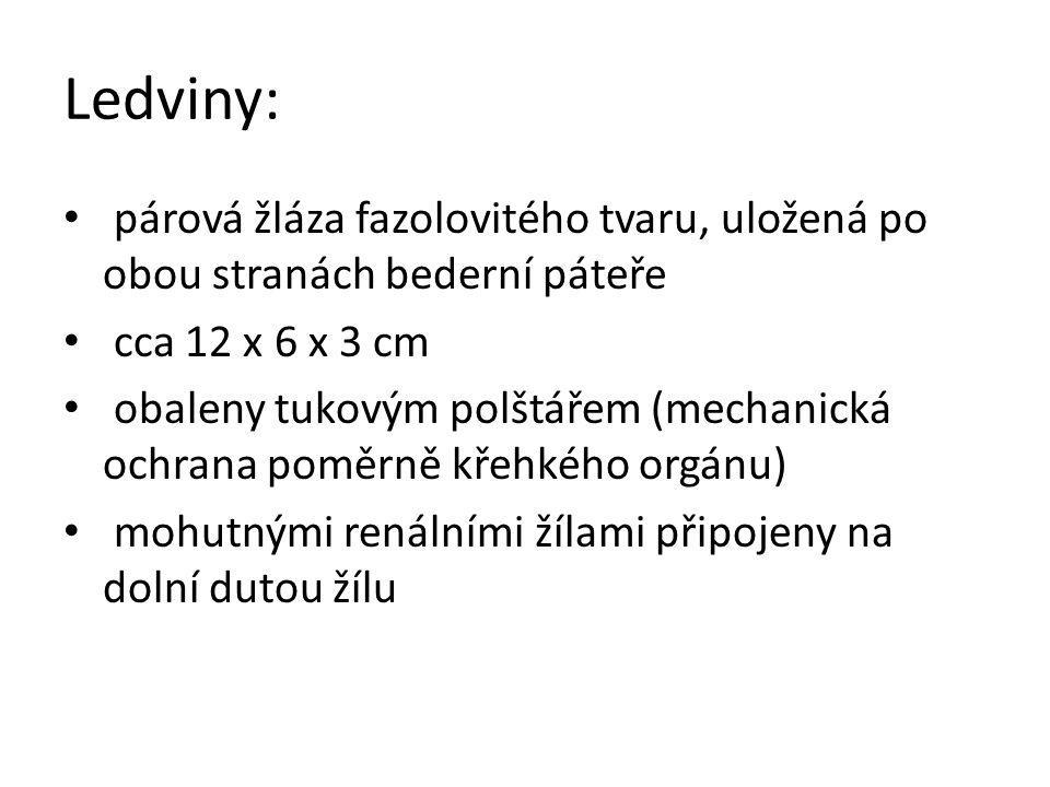 Ledvinové pouzdro Kůra s ledvinovými váčky Dřeň Kalich Močovod Ledvinová tepna Ledvinová žíla Ledvinová pánvička