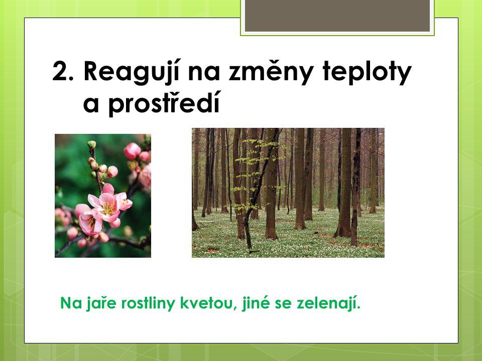 2. Reagují na změny teploty a prostředí Na jaře rostliny kvetou, jiné se zelenají.