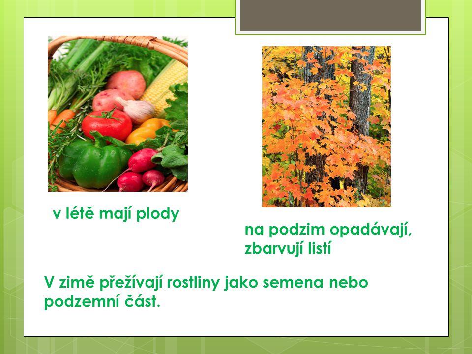 v létě mají plody na podzim opadávají, zbarvují listí V zimě přežívají rostliny jako semena nebo podzemní část.