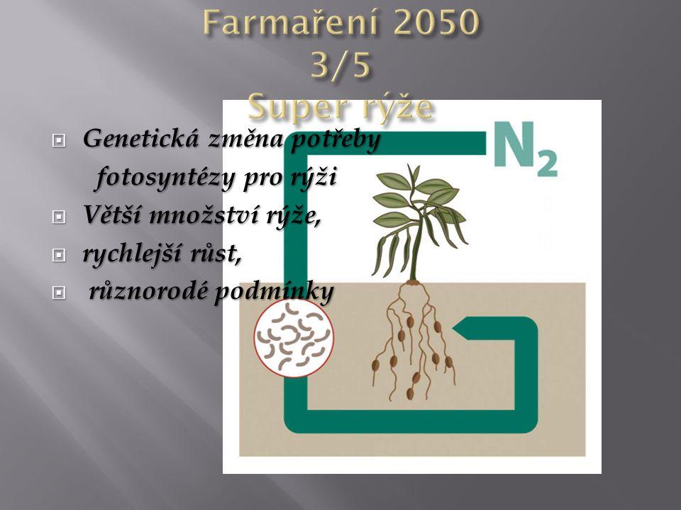 Genetická změna potřeby fotosyntézy pro rýži fotosyntézy pro rýži  Větší množství rýže,  rychlejší růst,  různorodé podmínky