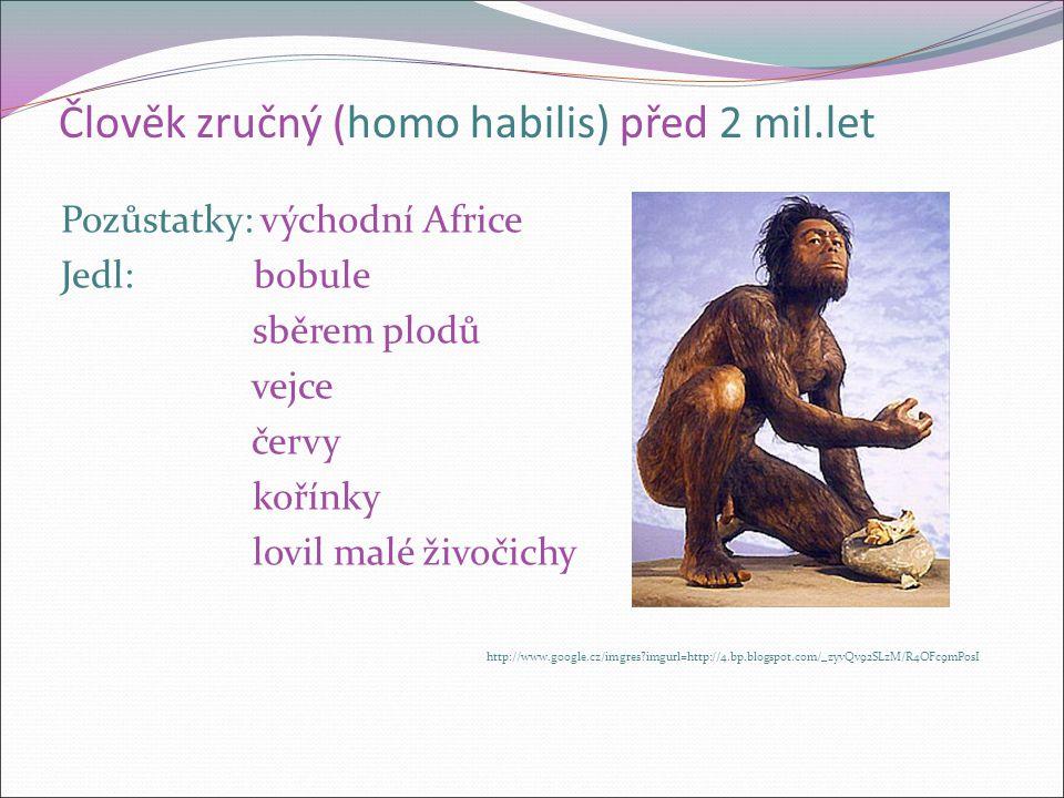 Člověk zručný (homo habilis) před 2 mil.let Pozůstatky: východní Africe Jedl: bobule sběrem plodů vejce červy kořínky lovil malé živočichy http://www.