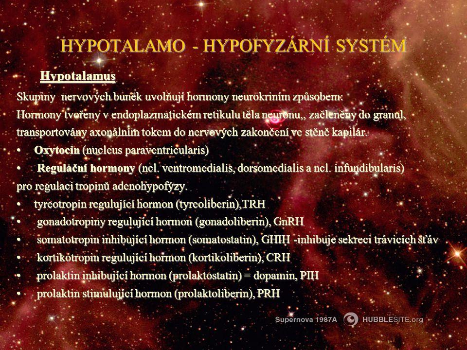 HYPOTALAMO - HYPOFYZÁRNÍ SYSTÉM Hypotalamus Skupiny nervových buněk uvolňují hormony neurokriním způsobem: Hormony tvořeny v endoplazmatickém retikulu