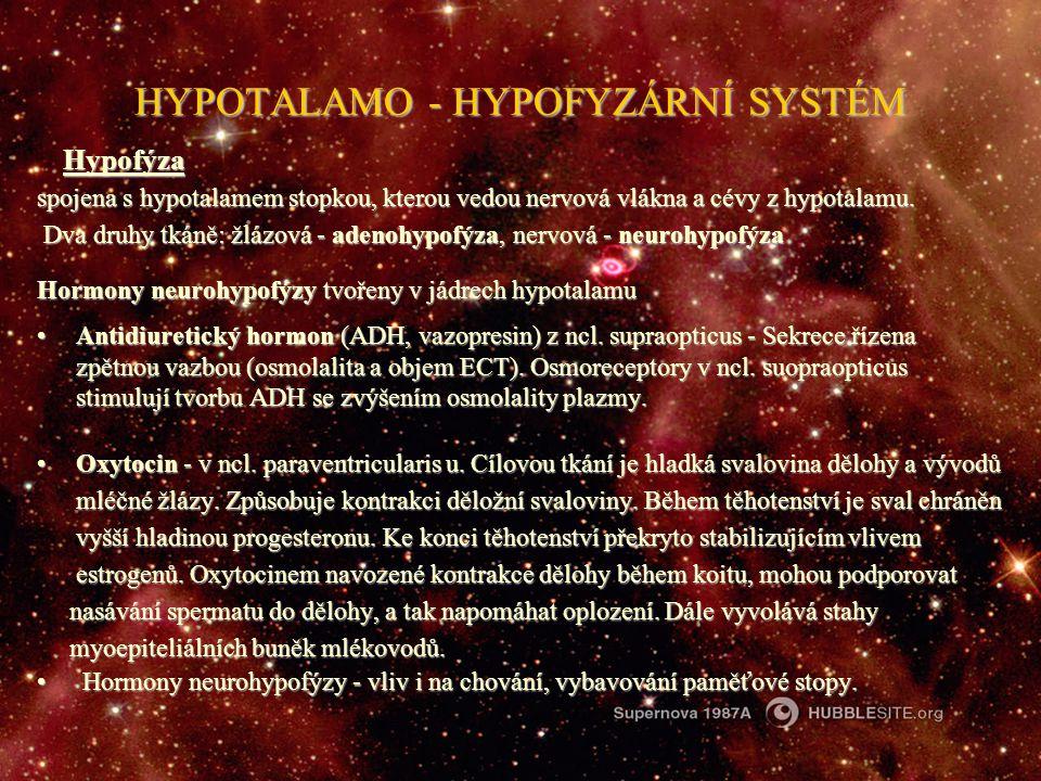 HYPOTALAMO - HYPOFYZÁRNÍ SYSTÉM Hypofýza Hypofýza spojena s hypotalamem stopkou, kterou vedou nervová vlákna a cévy z hypotalamu. Dva druhy tkáně: žlá