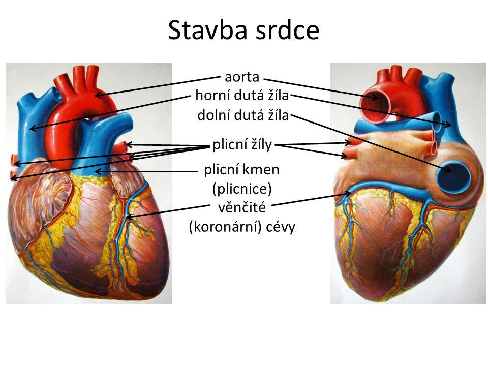 Shrnutí a opakování Která srdeční dutina má nejsilnější stěnu.